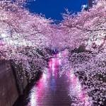 bsPAK86_yozakura15201150